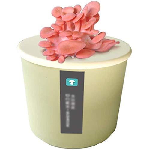 LSSB Pilze Züchten Set, Pilzzuchtset Champignons Bio, Anzuchtset Bonsai für Haus, Kultur Klein Anzuchtset für Kinderleicht, Ideales Geschenkpink-White Oyster Mushroom