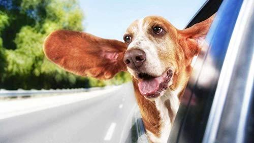 XIAOZHANG 5D Diamant Stickerei Runder Bohrer Hund Im Auto Embroidery Cross Stitch Für Erwachsene Home Wall Decoration 40X55Cm