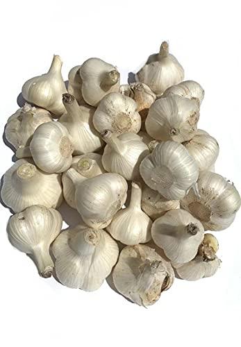 新物 青森県産ホワイト六片にんにく 新鮮にんにく 訳ありにんにく 大小玉込み5kg