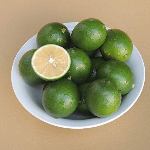 沖縄産 マイヤー グリーン レモン1kg