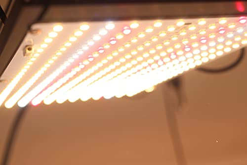 Rhino Series 70 V3 - Éclairage horticole LED