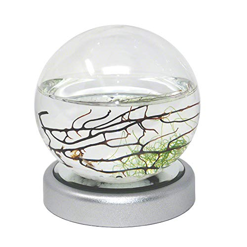 EcoSphere Closed Aquatic Ecosystem, Small Sphere with LED Base