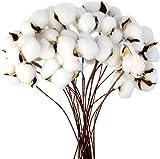 Msrlassn flores artificiales de algodón seco natural, Algodon Natural Flor Ramo de Flores Secas,para decoración del hogar,Decoración de bodas y fiestas (20 piezas)