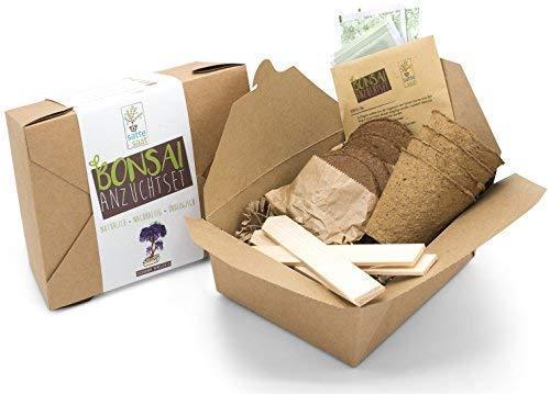 Satte Saat Bonsai Anzuchtset - Züchte Vier Bonsaibäume mit ökologisch abbaubaren Pflanztöpfen sowie Kokos-Tabletten, inkl. Anleitung, Holz-Sticks und Samen Frauen und Männer