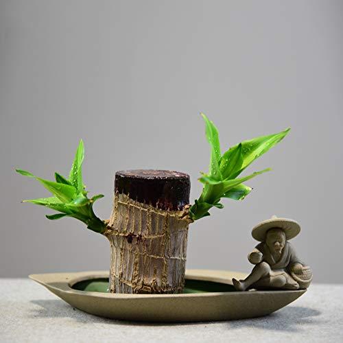 CKR Brasil Groot, Planta en Maceta Lucky Wood, tocón de árbol hidropónico,...