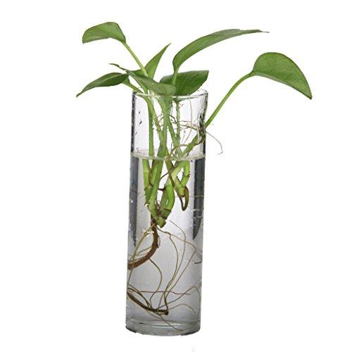 Générique Vase Cylindre Mural Suspendu en Verre Transparent pour Plante Fleur Hydroponique DIY Paysage Miniature