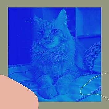 孤独な猫-音