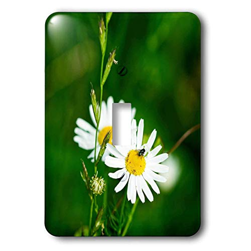 1-Gang Wall Plate Cover Decorator Switch Light Double Receptacle Outlet Alexis Photography Flowers Daisy Two White Daisy Flowers A Stem Of A Wild Plant A Fly On A Flower Classic Unbreakable Beadboard