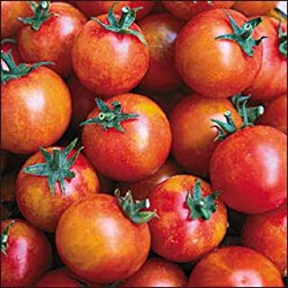 Isis Cherry Candy Tomato - 20 Seeds - Fruity