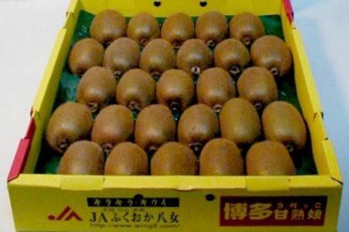 福岡産 キウイフルーツ キラキラキウイ 27個入り 140g/1個