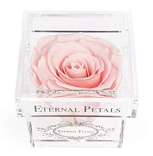 A 100% Real Rose That Lasts A Year - The Perfect Unique Gift for Women and Men, an Anniversary Gift, A Birthday Gift – White Gold Solo (Light Pink)
