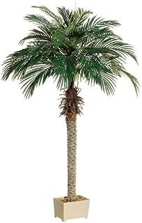 6' Phoenix Palm Tree in Rectangular Plastic Pot (Pack of 2)