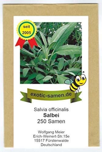 Salbei, echter Salbei - Bienenweide - Salvia officinalis - 250 Samen