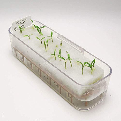 リビングファームパクチー水耕栽培苗作りキット(種子付き)