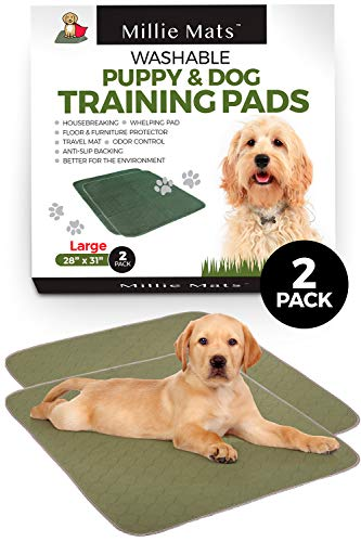 Use Dog Pads or Not