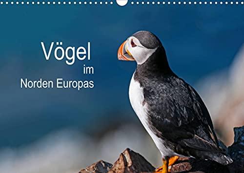 Vögel im Norden Europas (Wandkalender 2022 DIN A3 quer)
