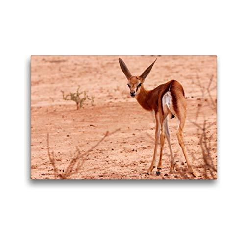 CALVENDO Premium Textil-Leinwand 45 x 30 cm Quer-Format Junges Impala in der Etosha Pfanne, Afrika, Leinwanddruck von Birgit Scharnhorst