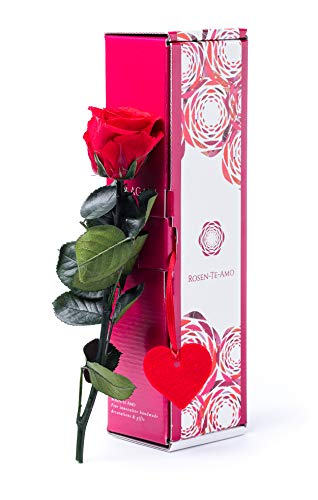 Rosen-Te-Amo konservierte ewige Rose rot