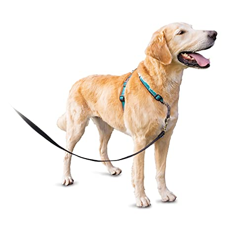 PetSafe 3in1 Harness, from The Makers of The Easy Walk Harness, Fully Adjustable No-Pull Dog Harness,Teal,Large
