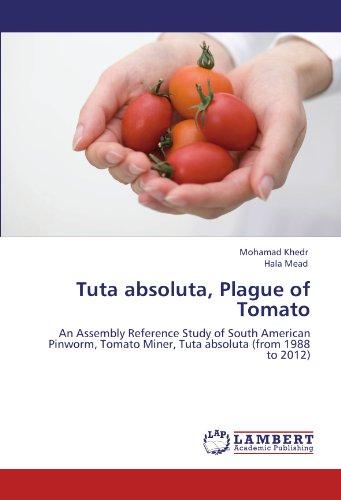 Tuta Absoluta, Plague of Tomato