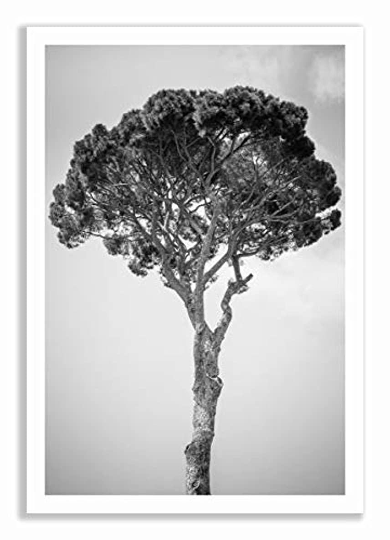 Italian Pine, Satin Black Aluminium Frame, with Mount, Multicolored, 70x100
