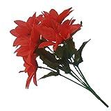 12 ramos de flores de pascua rojas (7 cabezas por ramo)
