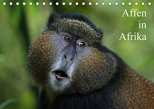Affen in Afrika (Tischkalender 2021 DIN A5 quer)
