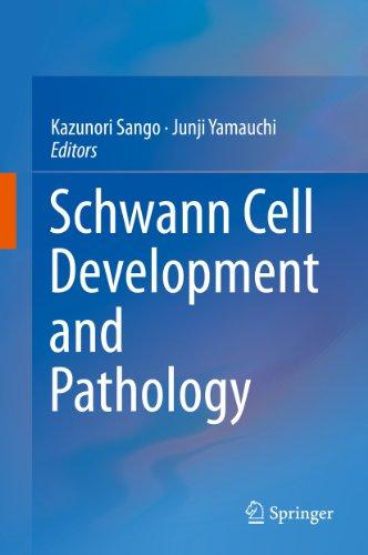 Schwann Cell Development and Pathology (English Edition)
