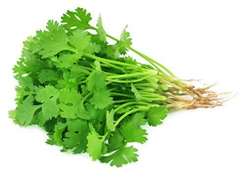 200 Cilantro Seeds for Planting - Heirloom Non-GMO Herb Seeds for Planting...
