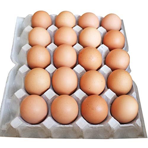 イヨエッグ 米っ娘たまご 20個 詰合せ 卵 愛媛県産 常温 鶏卵 たまご 国産 愛媛