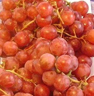 RED FLAME SEEDLESS GRAPE VINE - 2 Year Old