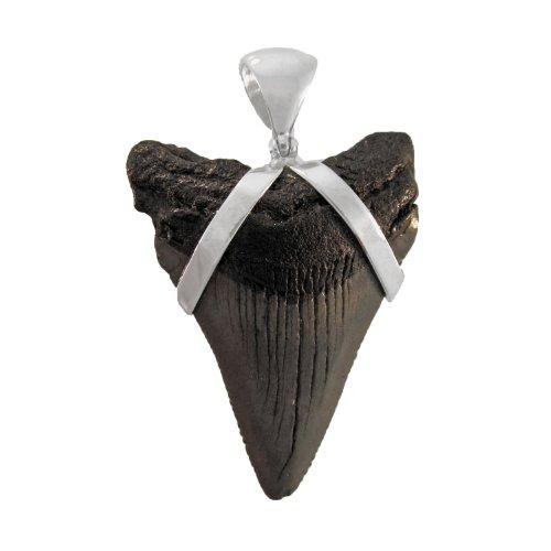 fosilizados Colmillo de tiburón colgante