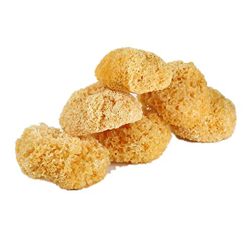 EASY SPA Sea Sponge, Natural Body Scrubber Excellent for Deep Cleansing, Perfect Sponge for Cosmetic Use (1)