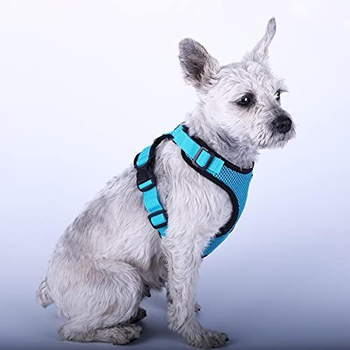 Arnés para perros Pet Dog Harness Summer Mesh Nylon Breathable Dog Vest Soft Adjustable Harness for Dogs Puppy Collar Cat Pet Dog Chest Strap Arnés para gatos (Color : Cyan, Size : Large)