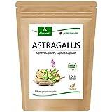 MoriVeda® Astragalus cápsulas 1600 mg, extracto en polvo de raíz de tragacanto 20:1, 112 mg de polisacáridos para el sistema inmunológico y la protección celular, vegano y sin gluten (90 cápsulas)