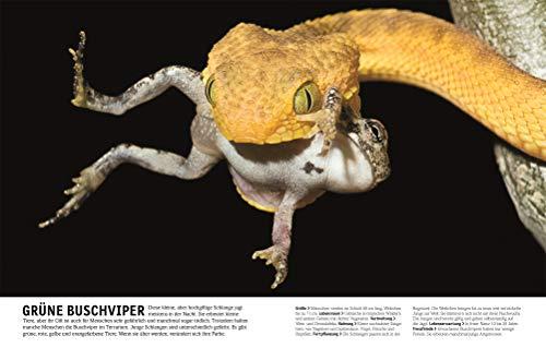 Tiere: Die Vielfalt der Tierwelt in 1.500 Bildern - 8