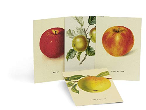 An Apple a Day 2020 - Postkartenset: 4 Stück