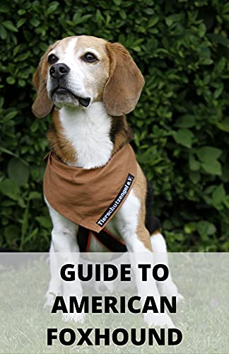 GUIDE TO AMERICAN FOXHOUND