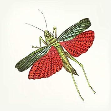 The Grasshopper Dilemma