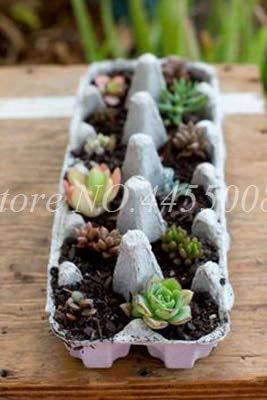 Bloom Green Co. 500 pcs/bag Exotic Mini Succulent Cactus Rare Succulent Perennial Herb Plants Bonsai Pot Flower Indoor Seedfor Garden Flore Pot: 12