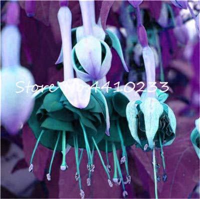 Bloom Green Co. 100 Unids Japonés Jardín Fucsia Bonsai Balcón Linternas Flores...