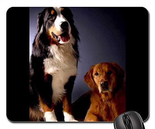Gaming-Mauspads, Mauspad, Berner Sennenhund Golden Retriever Dog Animal