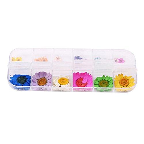 Jixing 12 couleurs Fleurs séchées décoration nail art autocollant DIY 3D gel UV acrylique Faux Conseils Nail Art Salon, 4#, 13 * 5,3 * 1,2 cm