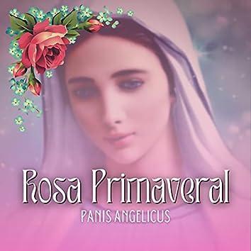 Rosa Primaveral