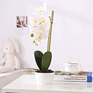 Best white orchids in a vase Reviews