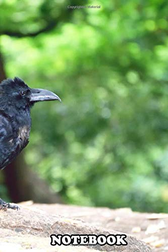 Notebook: The Indian Jungle Crow Is A Species Of Crow Found Acros , Journal for Writing, College Ruled Size 6