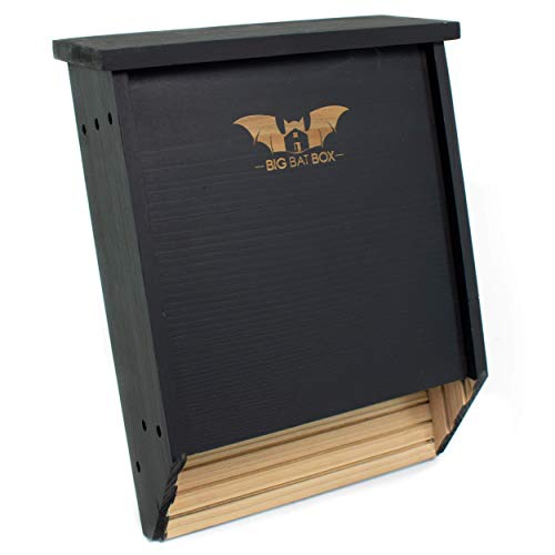 BIGBATBOX -Bat Houses for Outdoors - Proven Bat Box Design, Premium 2-Chamber Cedar Bat House. Enjoy Watching Bats Swooping in Your Backyard, Cleaning up on Your Mosquitos… (Black)