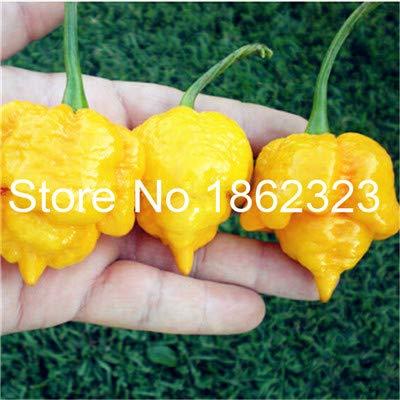 Bloom Green Co. 200 pcs Chilli Pepper Vegetable Organic Sweet paprika chili bonsais bonsai plant home garden indoor plants Vegetable Seedsplants: 7
