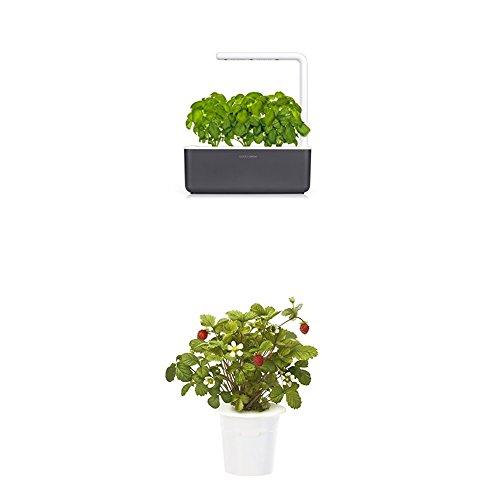 Click & Grow Smart Garden 3 jardinière d'intérieur 30 x 10 x 28 cm Gris anthracite (contient 3 capsules de basilic) + 2 recharges fraise (x3)