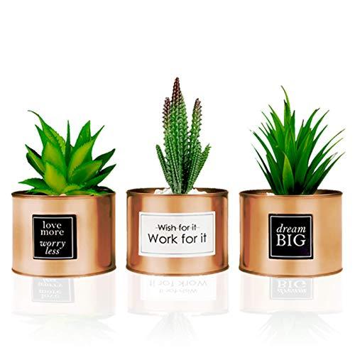 planta cactus fabricante FORTIVO